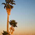Palm at Dusk - Tampa, Florida by rjhphoto