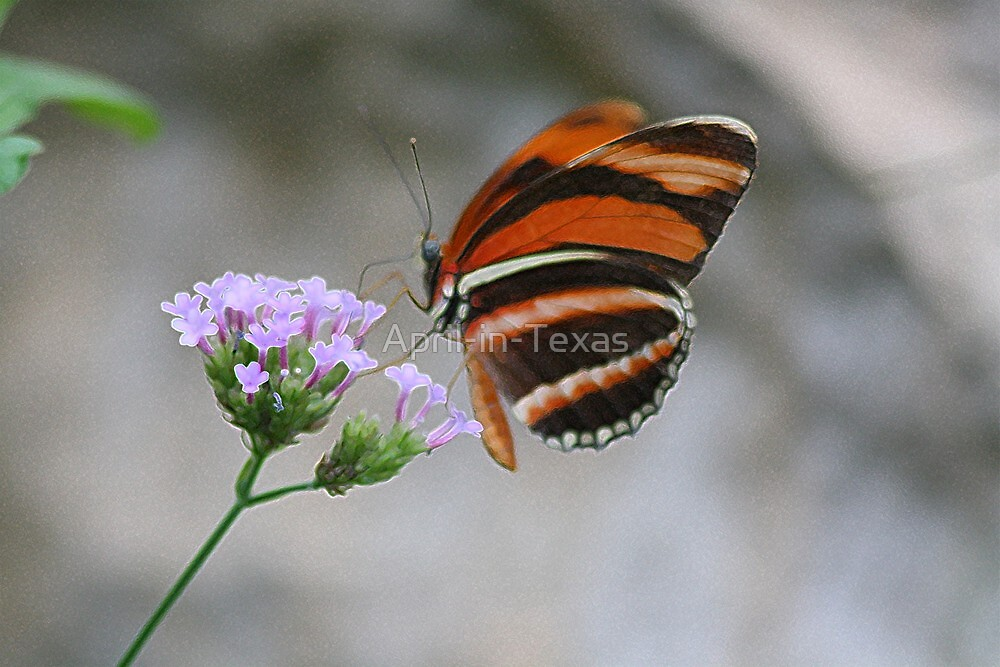 Butterfly Art by April-in-Texas
