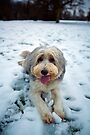 Happy New Year From Bailey by Paul Thompson Photography