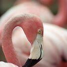 Flock by Kristin Hamm