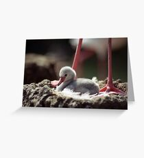 Flamingo Chick in Nest Greeting Card