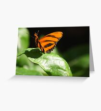 Banded Orange Butterfly Greeting Card