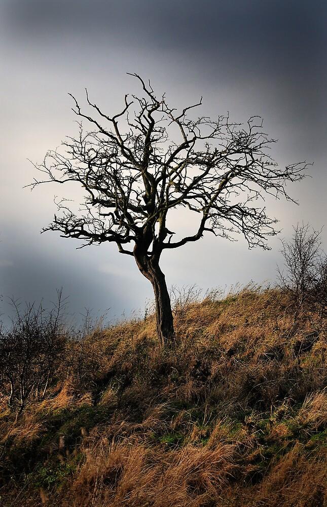 Wee Tree, Scotland by Scott Moncrieff