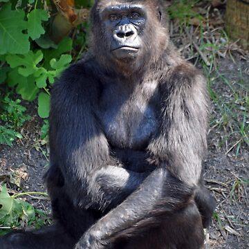 Gorilla  by venny