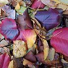 Jewel Tone Fallen Autumn Leaves by Jeanne Kramer-Smyth