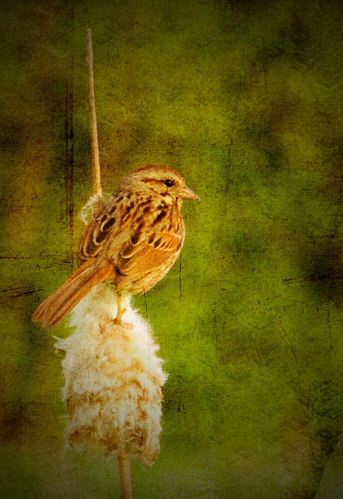 KEEP YOUR EYE ON THE SPARROW by Diane Peresie