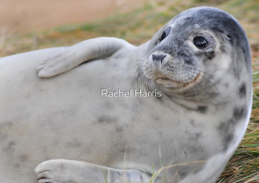 Seal by Rachel Slater