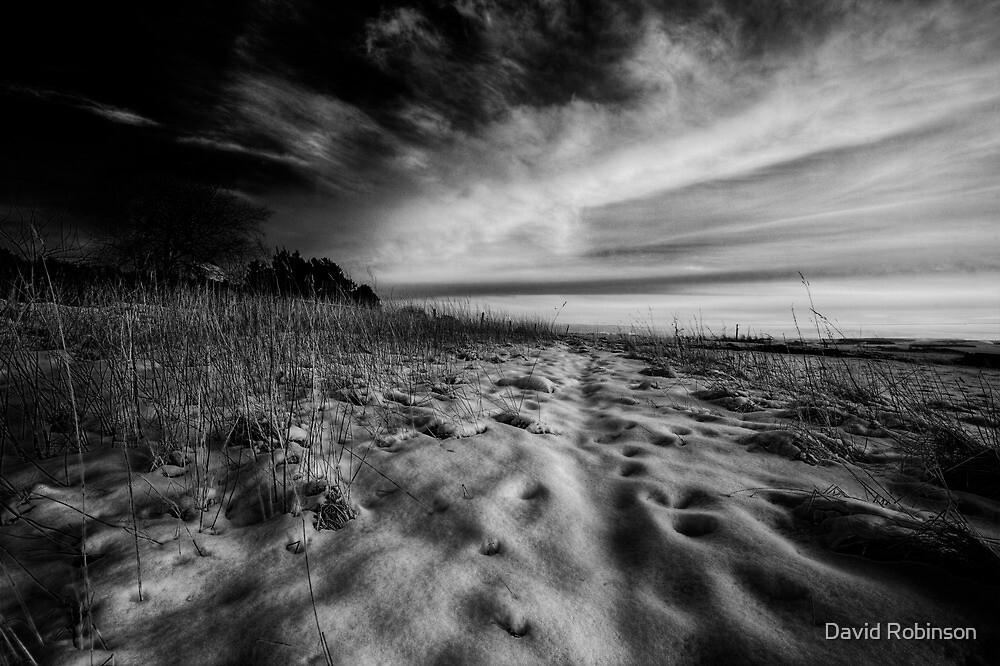 Quietly Shining by David Robinson