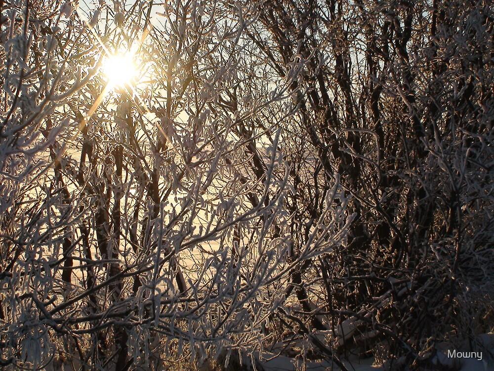 Frosty Sunburst by Mowny