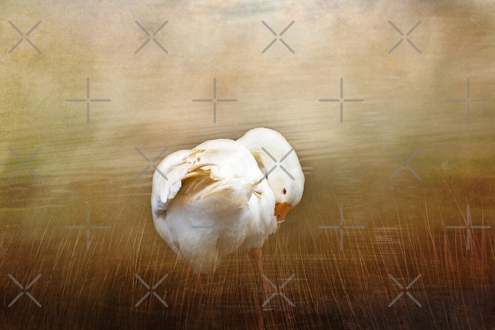 Goose with an Itch by Elaine Teague