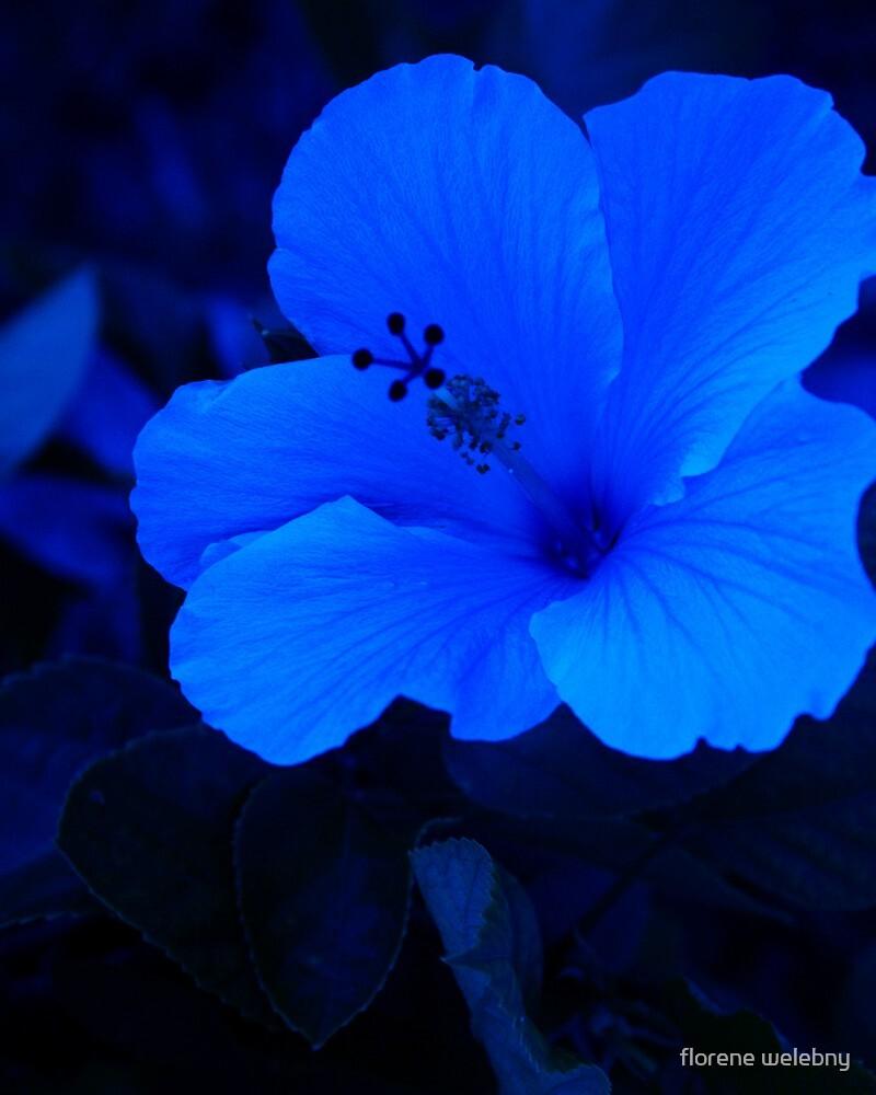 Big Blue Hibiscus by florene welebny