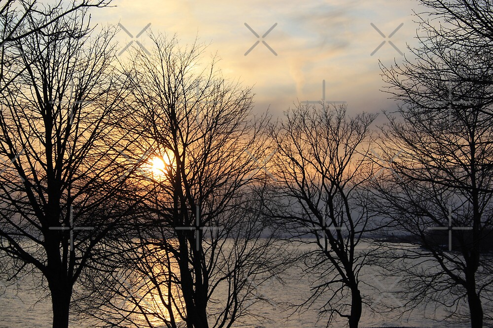 Sunset Through the Trees by Alyce Taylor