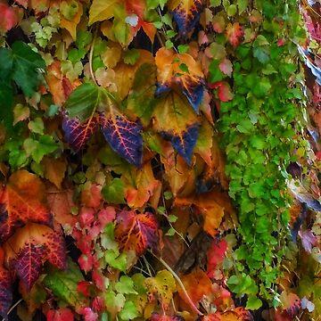 Fall Ivy by OliviaHathaway