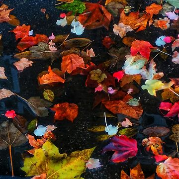 Leaves and Puddle  by OliviaHathaway