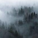 Misty Morning by Patrice Mestari