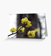 Closer Up  Sassafras Blossoms Greeting Card