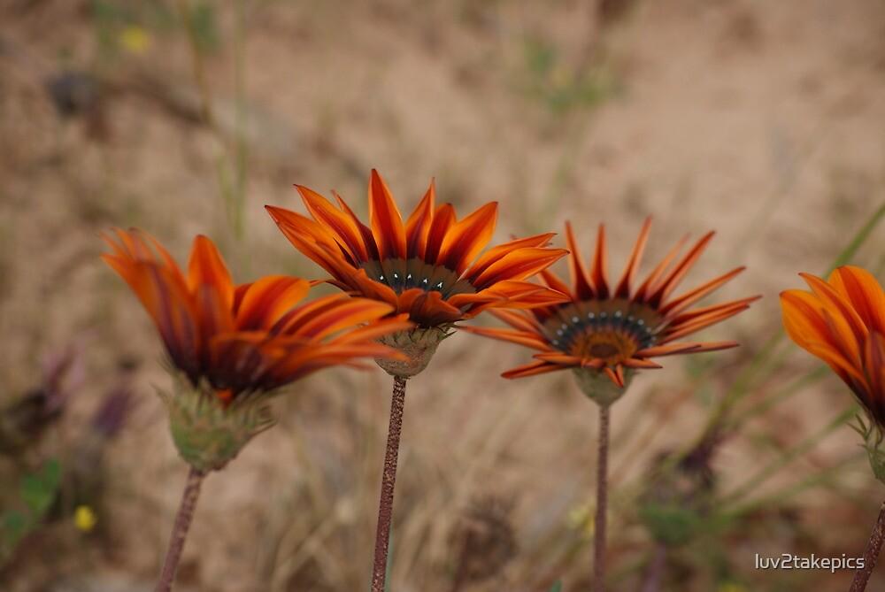 Wild Flowers by luv2takepics