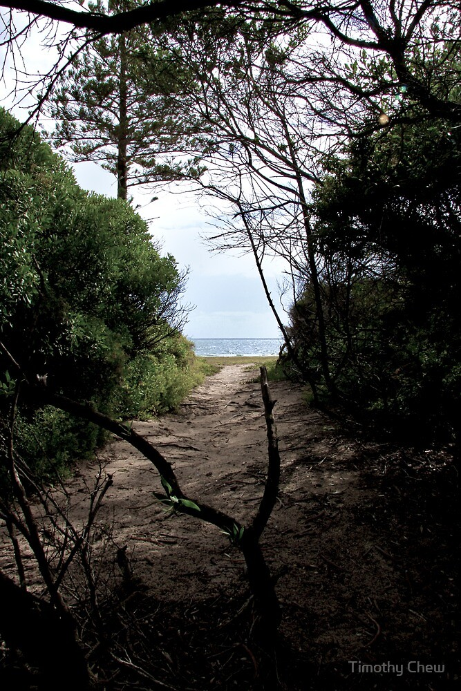 Elwood Beach Path to the Beach by Timothy Chew