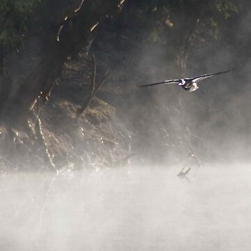 Duck on final approch through the mist by BigAndRed