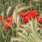 Grain and Poppies by vbk70
