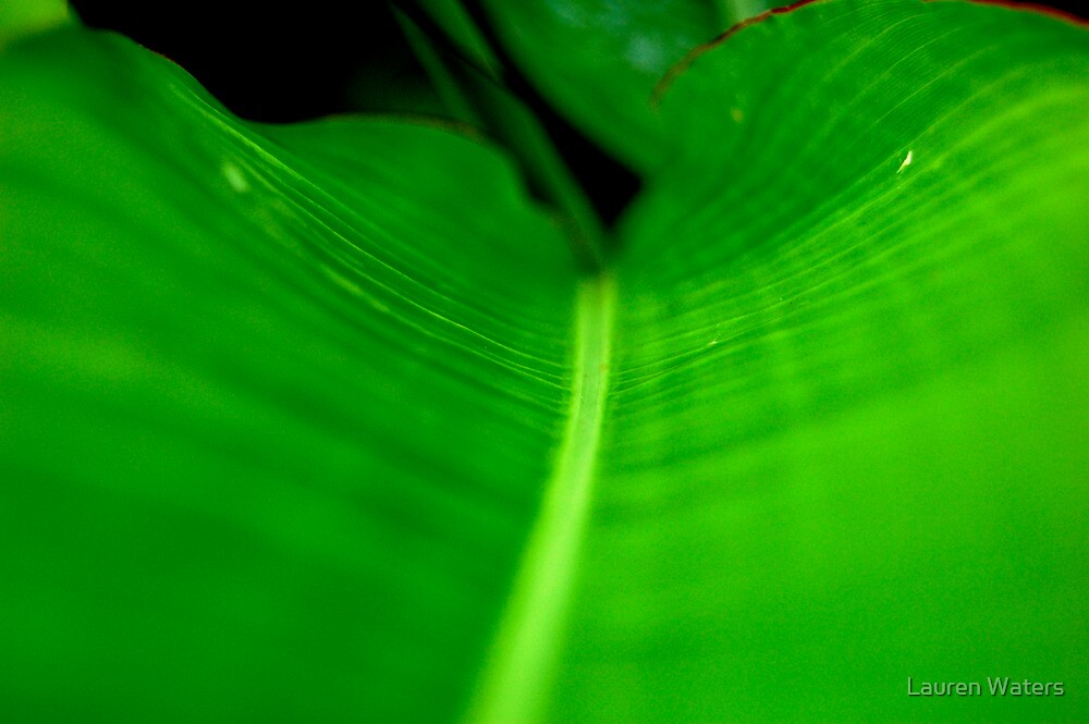 Green Leaf by Lauren Waters