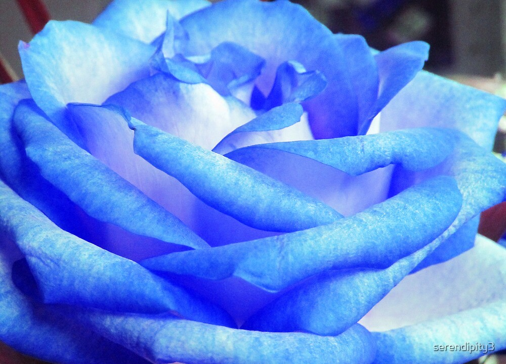 Blue Rose by serendipity3