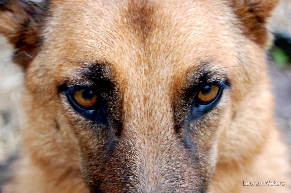 Dog eyes by Lauren Waters