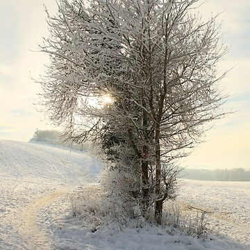 Snow Covered Tree by AlysonFennell