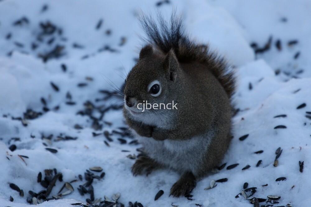 Shivering Red Squirrel by cjbenck