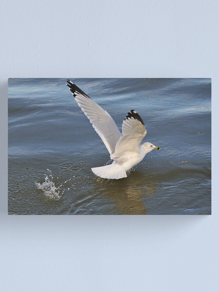 Alternate view of Gull on the river Canvas Print