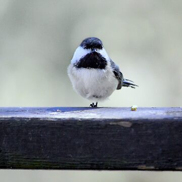 Stoical Little Chickadee by LaurieMinor