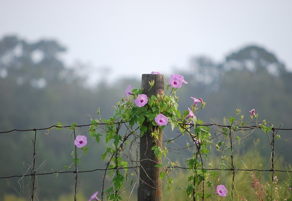 Flowering Vine on Southern Fence by pianoann