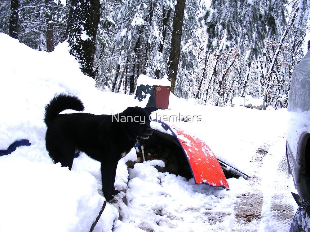 Odie In The Snow by NancyC
