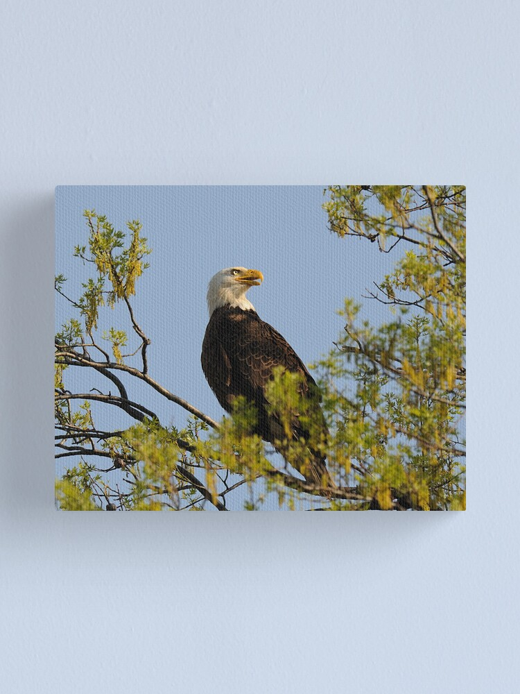 Alternate view of Eagle Canvas Print