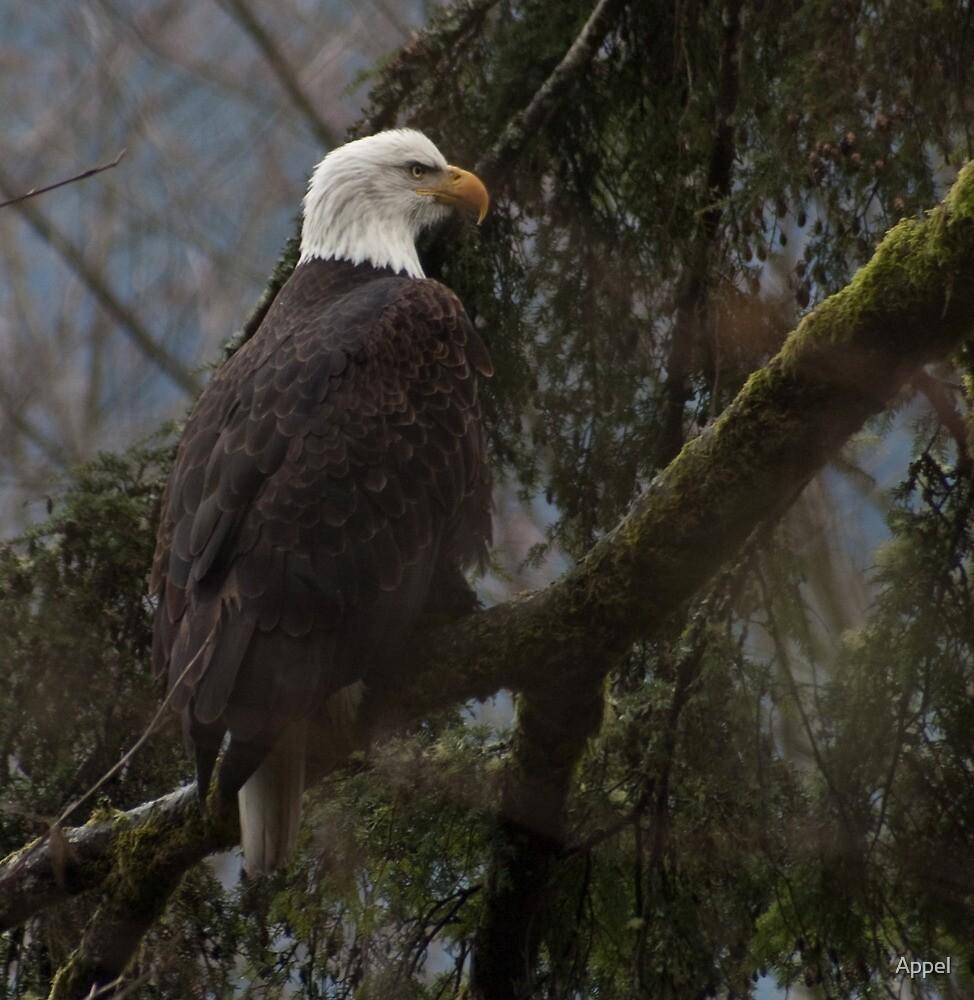 Eagle II by Appel
