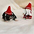 Hund - Weihnachten  von laura-S