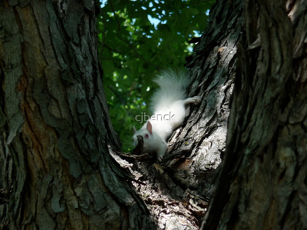 Albino Red Squirrel by cjbenck