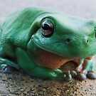 Green Frog by medley