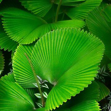 Green leaves by Dalyn