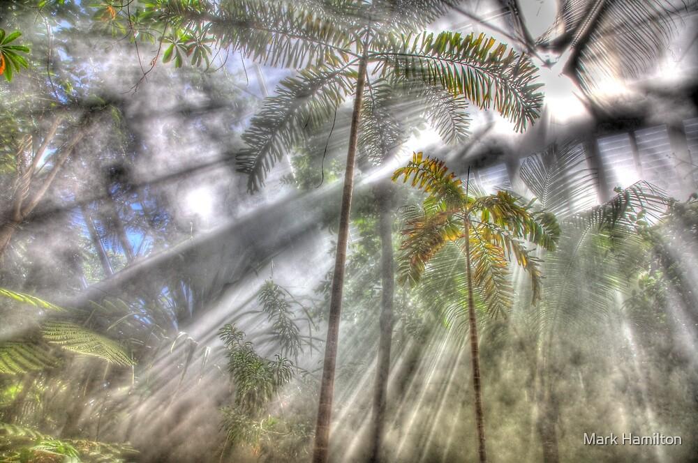 Light Streaming Rainforest Dreaming by Mark Hamilton