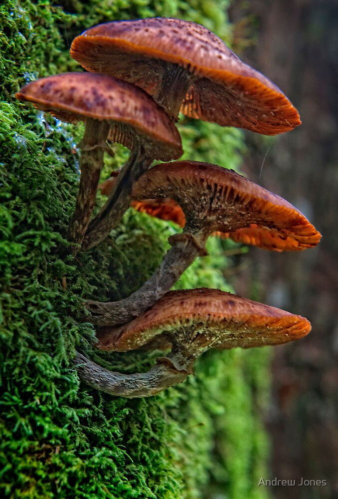 Fungi, Woodstock Demesne, Inistioge, County Kilkenny, Ireland by Andrew Jones