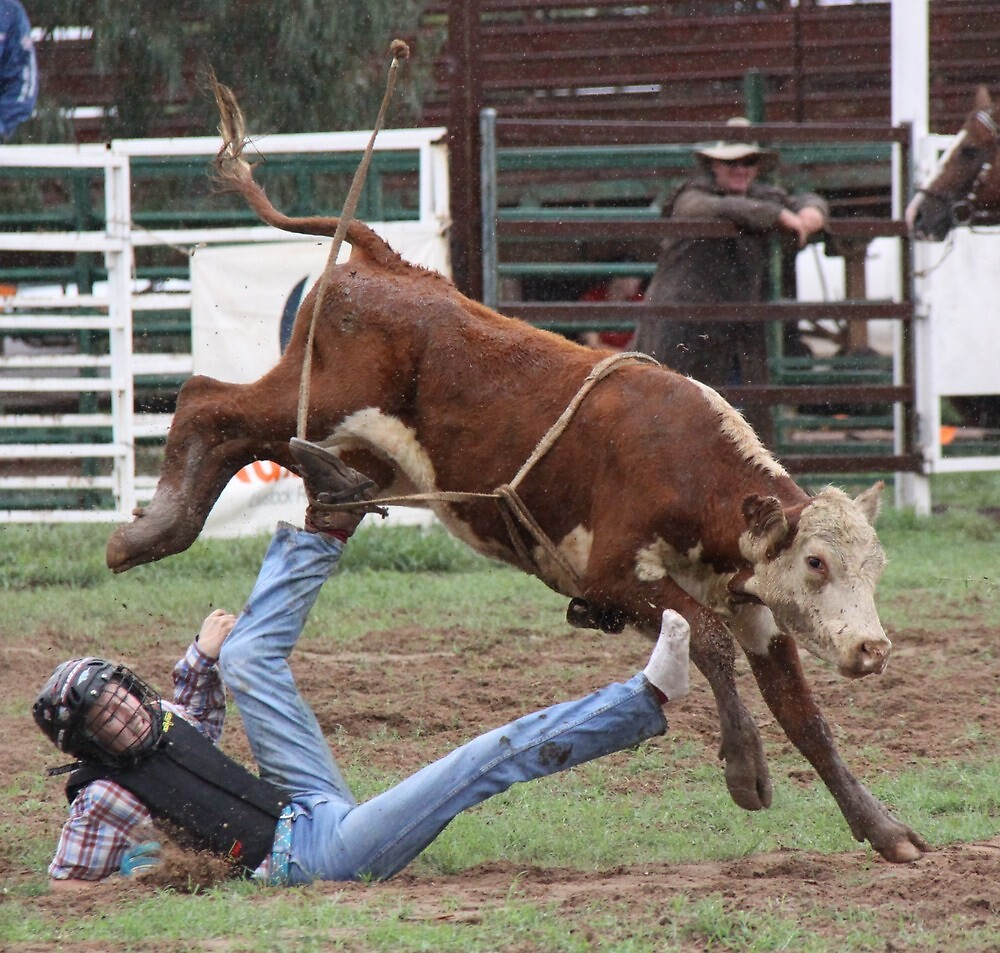Young bull rider bites the dust by StaceyH