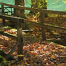 Foot Bridge by Ginger  Barritt