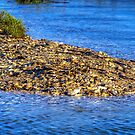 Shells at the Shore by TJ Baccari Photography
