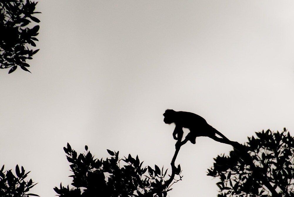 Monkey Silhouette by gleam