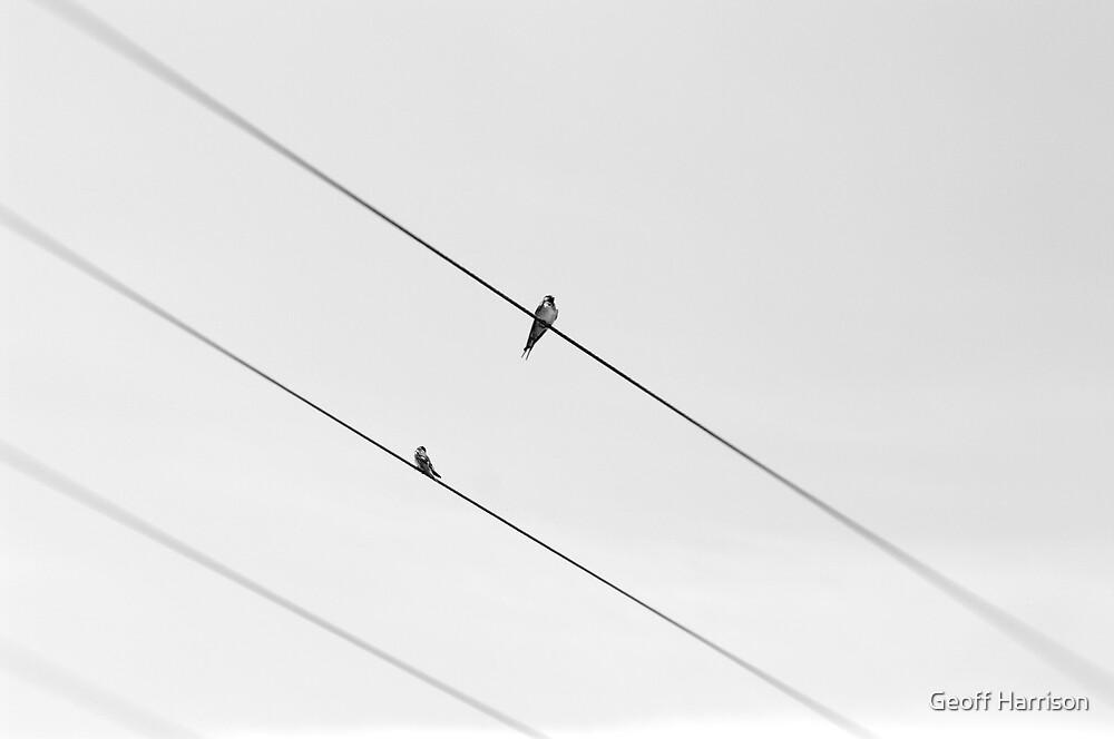 Wire by Geoff Harrison