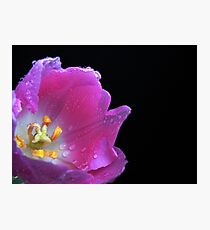 Lovely Tulip. Photographic Print