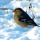Snow Bird by Trevor Kersley