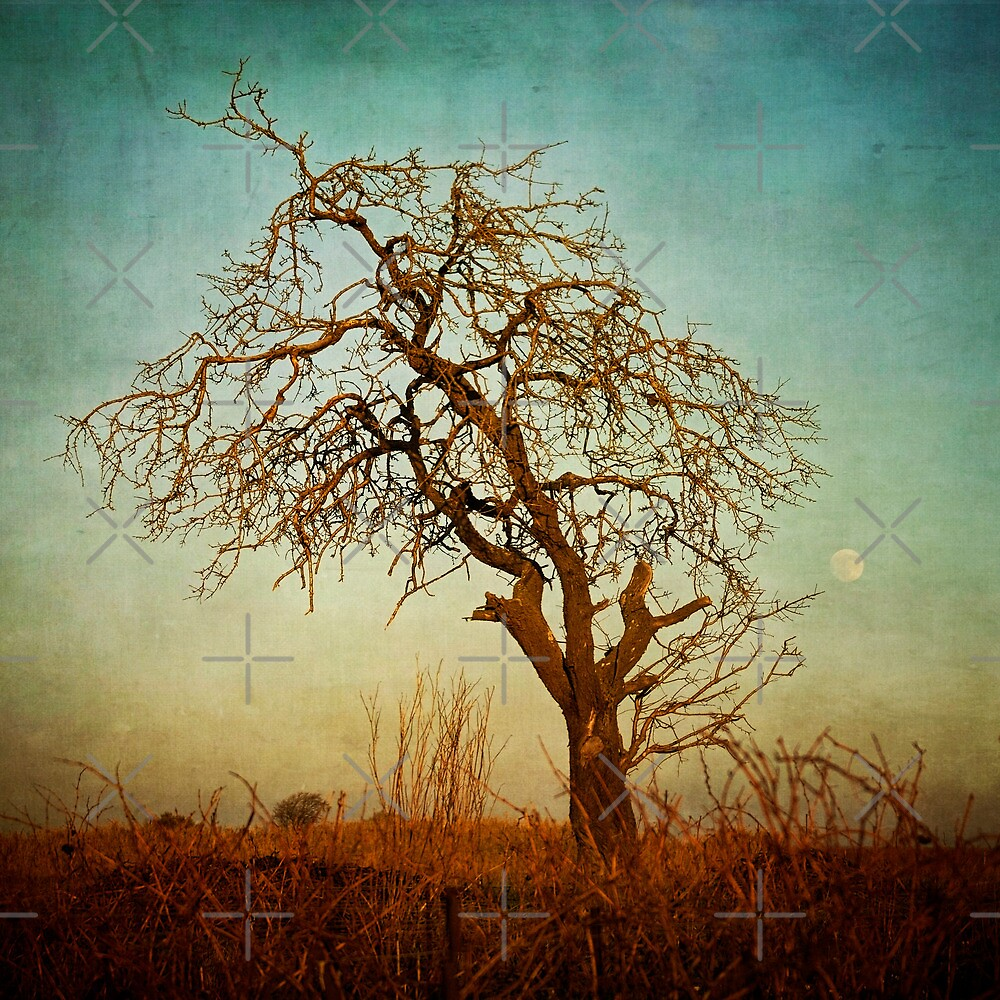 moon tree by paulgrand