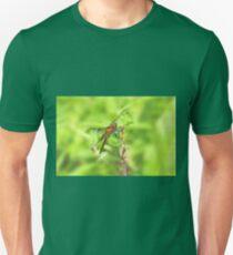Widow Skimmer Dragonfly - Libellula luctuosa T-Shirt